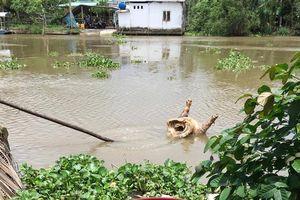 Hậu Giang: Yêu cầu chấm dứt ngay hành vi vứt xác lợn chết ra môi trường