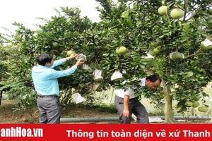 Vai trò của HTX trong xây dựng nhãn hiệu sản phẩm nông nghiệp