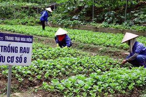 Phát triển nông nghiệp hữu cơ: Mở hướng mới cho nông nghiệp Việt Nam