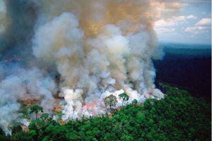 Rừng Amazon chờ cứu, TT Brazil quyết chờ TT Pháp xin lỗi