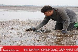 Loại bỏ nguyên nhân hơn 263 tấn ngao chết ở Mai Phụ do dịch bệnh