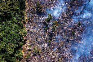 Cháy rừng Amazon: Brazil bắt giữ 63 đối tượng liên quan