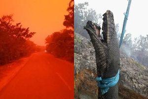 Indonesia: Bầu trời 'đỏ như máu', trăn khổng lồ bị thiêu sống vì cháy rừng