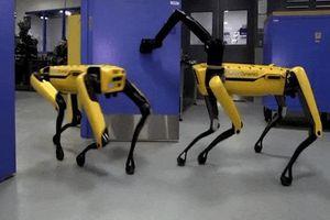 Chú chó robot biết mở cửa và đợi bạn đi qua đã được bán ra thị trường