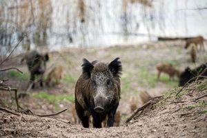 Tưởng săn lợn rừng, sững người con trai gây bi kịch thảm khốc