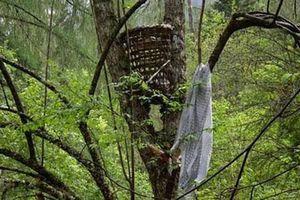 Huyền bí rừng ma đồng nhi