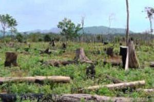 Đắk Nông: Cơ quan chức năng bất lực trước tình trạng phá rừng?