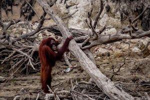 Indonesia: Quang cảnh hoang tàn từ tâm thảm họa cháy rừng