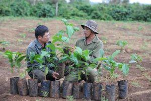 VnSAT – Hỗ trợ tổng hợp và đa dạng cho nông dân trồng cà phê Tây Nguyên