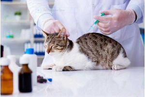5 lợi ích xét nghiệm sinh hóa máu thú cưng tại bệnh viện thú y Hà Nội
