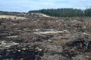Lá chắn thiên tai hơn 140 ha ở Bình Định bị 'thủ tiêu' trơ gốc