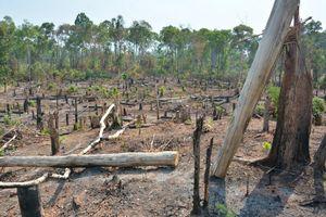 Vụ mất 1.200 ha rừng Ia Púch: Khởi tố nguyên trưởng ban quản lý rừng