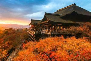 Ngắm mùa thu đẹp hút hồn du khách ở Nhật Bản