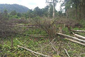Gia Lai: Gần 1.200ha diện tích rừng 'bị mất': Khởi tố nguyên trưởng ban