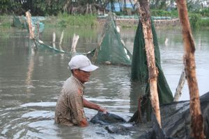 TP.HCM: Triều cường đạt đỉnh, trại nuôi cá cảnh của người dân chìm trong biển nước