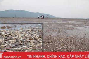Hơn 263 tấn ngao chết ở 'vựa ngao' Hà Tĩnh do sốc nước ngọt!