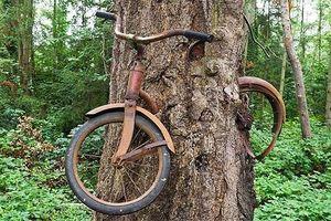 Bí ẩn cây nuốt xe đạp