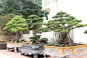 Vườn siêu cây trị giá gia tài cả chục triệu USD của đại gia đất Tổ