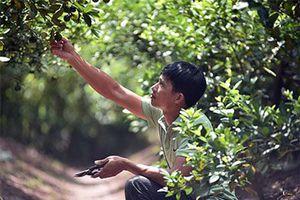 Hưng Yên: Hóng chuyện ở chợ, 7 năm sau anh nông dân đã thành tỷ phú