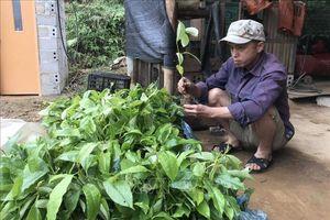 Kết luận thanh tra về sai phạm trong cấp cây giống cho hộ nghèo ở huyện Bình Gia, Lạng Sơn