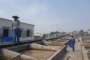 Làng nghề nước mắm nức tiếng đất Cảng: [Bài 1] Cầu kỳ nghề làm nước mắm