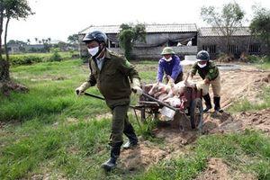 Kiểm soát môi trường trong tiêu hủy lợn