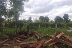 8 tấn gỗ lậu mất tích bí ẩn: Lãnh đạo Chi cục Kiểm lâm tỉnh Gia Lai nói gì?