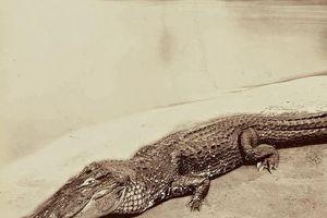 Những hình ảnh hiếm hoi về rừng Amazon giữa thế kỷ 19