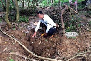 Có hay không chuyện đào được gỗ sưa tiền tỷ?