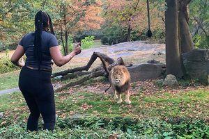Run người xem cô gái vào chuồng nhảy 'điên cuồng' đe sư tử