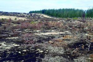 Tạm dừng dự án Nhà máy phong điện vì để mất 140 ha rừng