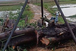 Người phụ nữ nghèo bị cây ngô đồng đè tử vong trong lúc chạy mưa