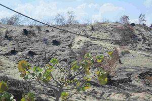 Bình Định: 141,9 ha rừng phi lao bị hủy diệt chưa xác định được nguyên nhân, tạm dừng thực hiện dự án Phong Điện Phương Mai 1