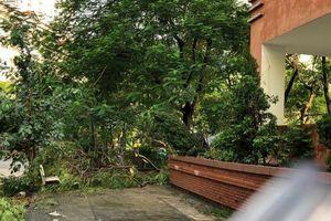 Hà Nội: Sau trận mưa to cây xanh bật gốc, nhà dân lốc mái