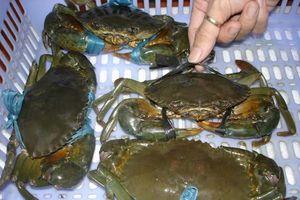 Cua biển sống xuất sang Trung Quốc giá trung bình 2USD/kg?