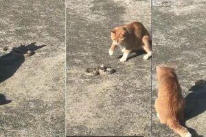 Clip mèo tung cước hạ gục rắn trong trận quyết chiến