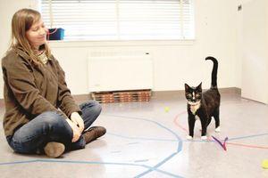 Phát hiện thú vị về sự gắn bó giữa mèo và người