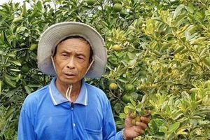 Nông dân miền Tây đổi đời nhờ trồng cây... độc, lạ