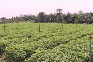 Hà Nội: Làm giàu nhờ mô hình trồng rau an toàn