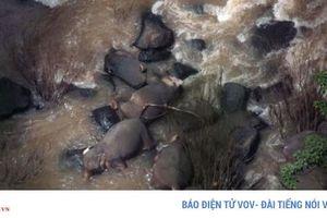 5 chú voi tử nạn khi lao xuống thác để cứu đồng loại bị rơi xuống đó