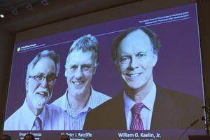 Nobel Y học 2019: Vinh danh phát hiện tế bào thích nghi ôxy