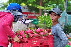 Bình Thuận nuôi ước mơ thanh long thâm nhập thị trường khó tính