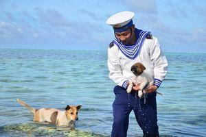 Xúc động bài thơ 'Bơi vào đi' về những chú chó canh giữ biển trời ở Trường Sa