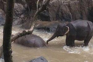 Thái Lan cứu hộ một đàn voi con bị kẹt bên dòng nước lũ