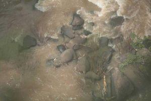 Đau lòng thảm kịch 6 chú voi chết đuối vì cố cứu đồng loại