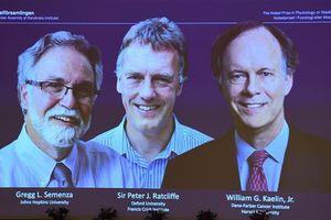 Giải Nobel Y học 2019 vinh danh các nhà khoa học với công trình nghiên cứu tế bào