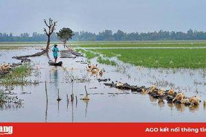 Mùa nước lũ trên những cánh đồng