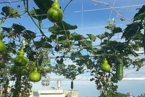 Sân thượng xây bồn kiên cố trồng đủ loại cây như trang trại ở Vũng Tàu