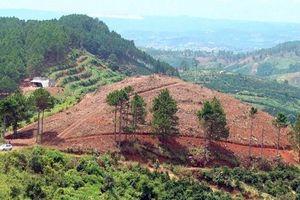 Điều tra các đối tượng cưa hạ rừng thông và san ủi đất lâm nghiệp trái phép