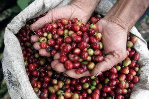 80% hàng nông sản Việt xuất khẩu thông qua các thương hiệu nước ngoài